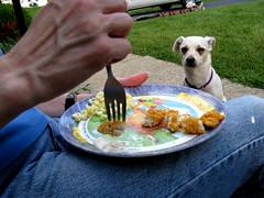 Pico... ette (creedbean) Tags: food dog eating pathetic adcock
