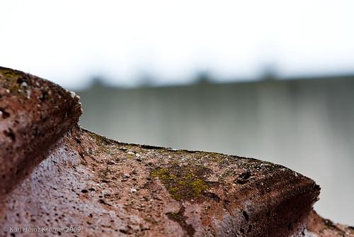 PhotoWalkRochester2009-074