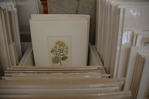 Flipping Through Botanical Prints in Wiscasset, Maine