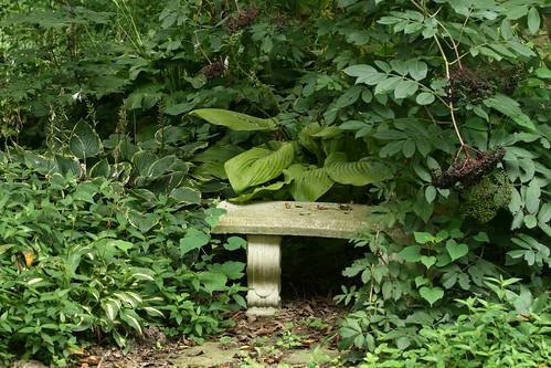 hosta bench