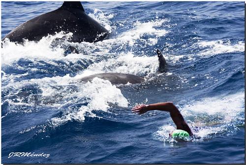 Entre delfines