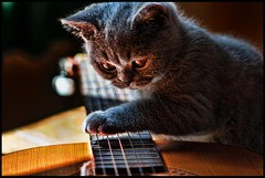 Cat Stevens Plays Slide Guitar (Fozzeee) Tags: uk blue england playing cat neck keys guitar guitarra jazz blues slide august scales bombay gb strings whatever katze monday gatto 2009 chitarra gitarre guitare sapphire frets britsh