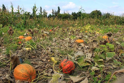 Pumpkins and More