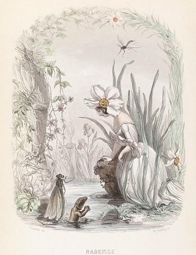 Narcisse - Les Fleurs Animées - JJ Grandville