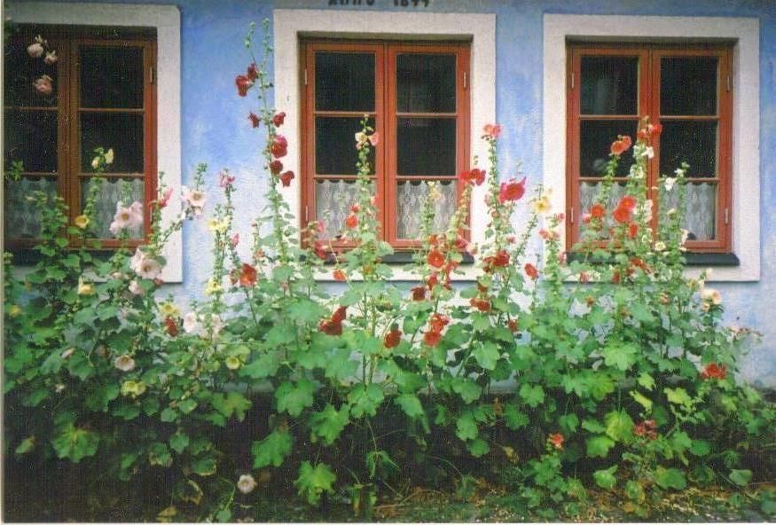 Blommor, Malmö