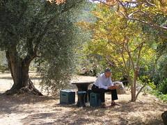 20090911 - Friday Olive Tree Blogging