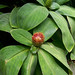 Fairchild Tropical Botanical Garden_1