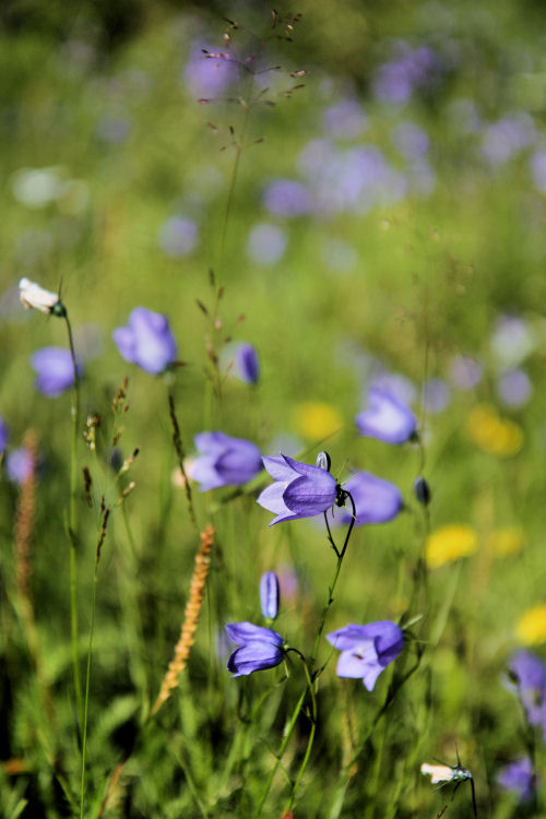 wild flowers 3980 R