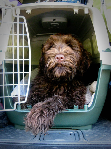 Ewok needs a bigger crate