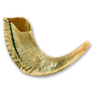 Shofar Ram Horn Half Polished 12