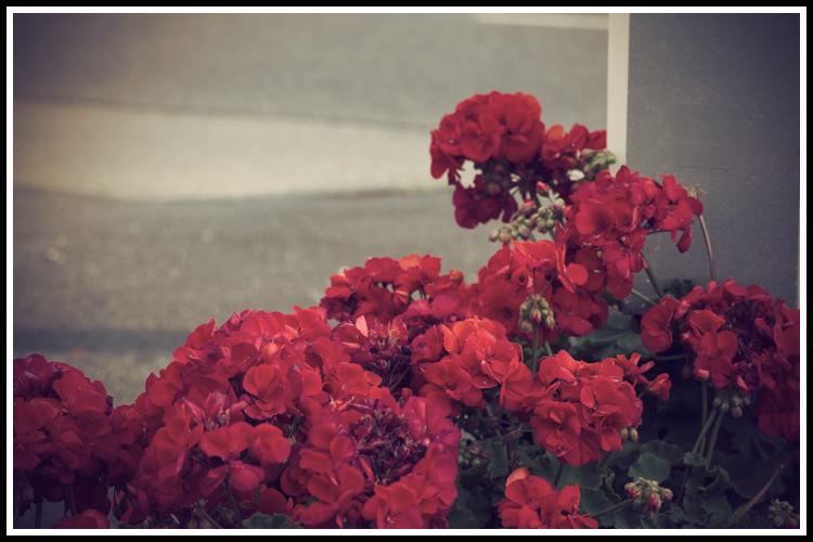 flowers_vint