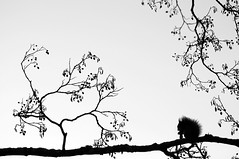 Silhouette (Latyrx) Tags: light shadow blackandwhite bw white black tree nature monochrome silhouette composition photoshop suomi finland photography photo nikon squirrel pattern graphic patterns details stock perspective monochromatic finnish minimalism nikkor sell 70300mm nocrop simple 2009 minimalist mikko telezoom resize latyrx d90 nikond90 nikond90bw mikkolagerstedt