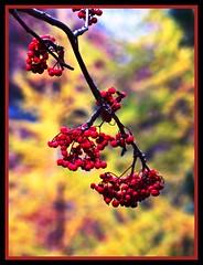 Anglų lietuvių žodynas. Žodis brown swiss reiškia ruda šveicarijos lietuviškai.