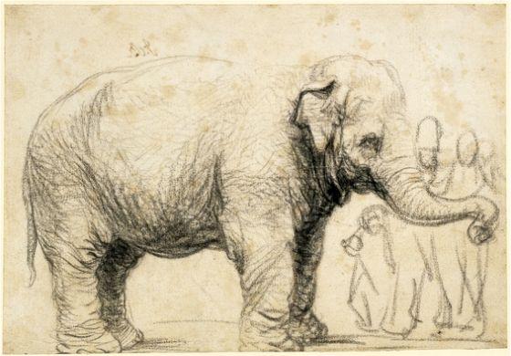 Rembrandt, An Elephant