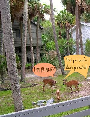 deer-in-the-back-yard