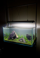 90x45x45cm Planted tank - First planting (Stu Worrall Photography) Tags: nature grass stone hair aquarium ada hc 90p as tennelus iwagumi ukaps aquasoil ukapsorg 90x45x45