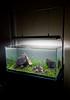 90x45x45cm Planted tank - First planting (Stu Worrall Photography) Tags: nature grass stone hair aquarium ada hc 90p as tennelus iwagumi ukaps aquasoil ukapsorg 90x45x45