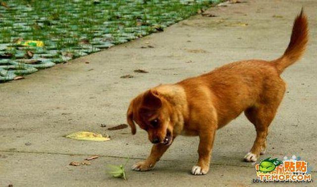 Собака и богомол (4 фото)