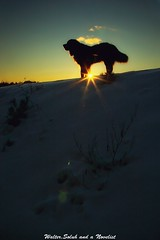 The dawn #3 (waltersoluh) Tags: winter dog snow nature sunrise dawn rs snowscape shilouette supershot fpg mywinners platinumphoto visiongroup theunforgettablepictures alwaysexc artistictreasurechest redmatrix colorsofthesou magicunicornverybest