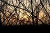 November (pixel-rausch) Tags: sunset backlight dusk shrubbery calendarshot