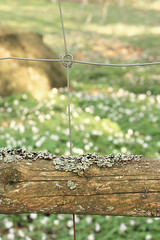 Spring fence (Lindy-hop) Tags: wood flower metal fence bokeh friday