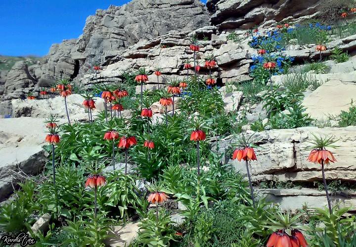 جمال الطبيعة كردستان العراق 5727463695_1281019824_b.jpg