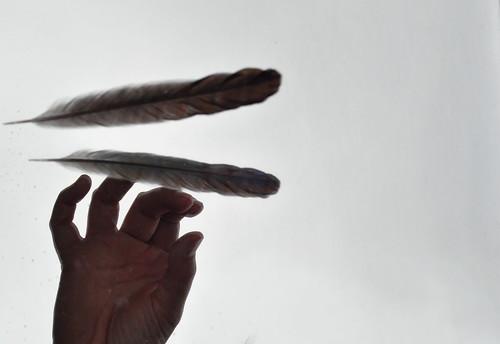 feather, mirror