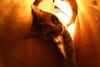 Jazz (Guillem Oliver) Tags: cat fisheye gato gata peleng ojodepez peleng8mmf35 canoneos450d