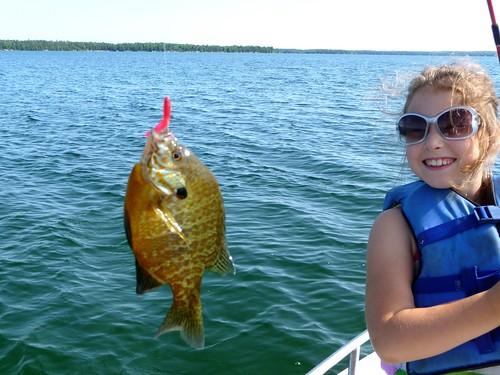 Sun Fish