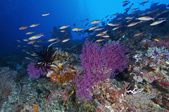 Tubbataha reef, Palawan Philippines