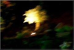 l'arbre magique.... (kate053 ( en vacances)) Tags: abstract lumire nuit arbre kate053