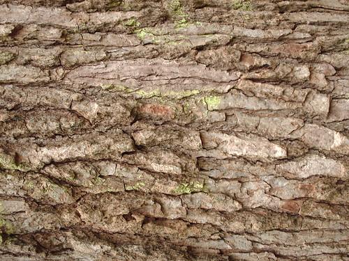 DesignM.ag Bark Texture - 14
