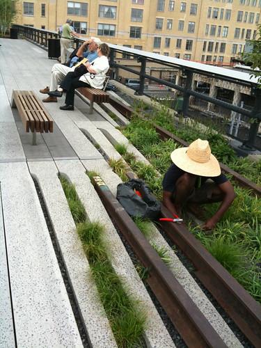 High Line Park gardener