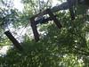 IMG_1857 (strongwater) Tags: dave jan bo velbert klettern witte klimmen svenja ilka luza strongwater waldkletterpark