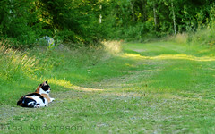 I need a break (Laijnloo) Tags: road wood summer forest cat butterfly way nikon nap break sweden path north pussy kitty explore gras khan 70300mm bushes summerhouse chill laying 254 blueribbonwinner nikond80 northensweden