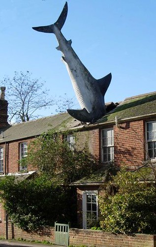 Shark Crash, Oxford