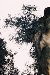 Point me at the sky (sar593) Tags: sky naturaleza tree film nature analog 35mm bogot pinkfloyd cielo rbol canonae1 analogo