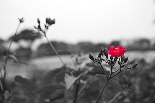black and white with red flower