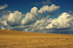 Dream World (Michelle in Ireland) Tags: blue ireland sky white field clouds golden day wheat hill crop beautifulday wheatfield whatamigonnado bej absolutelystunningscapes