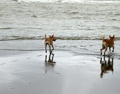 Footprints (squitten) Tags: ocean sea beach dogs taiwan footprints