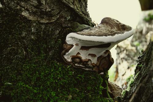 Autumn Fungi.