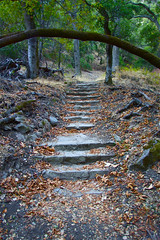 Forgotten Steps - San Jose, California, USA (Rich Capture) Tags: california trees beautiful landscape steps sanjose richard limbs alumrockpark richardmatyskiewicz matyskiewicz
