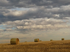 Our Alberta skies (annkelliott) Tags: light canada calgary nature beautiful beauty field horizontal clouds digital landscape lumix scenery image hill straw scene explore photograph alberta pointandshoot hay bales bale cloudysky stormclouds 53rdst colorimage ruralscene feelsgood beautyinnature southernalberta interestingness136 allrightsreserved beautifulexpression annkelliott southwestofcalgary fz28 panasonicdmcfz28 offhighway22x anneelliott2009 explore2009october26 p1290337fz28
