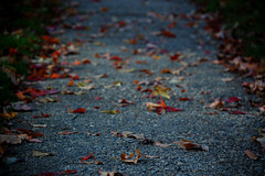 don't.go.off.wandering (scottcheloha) Tags: morning blue autumn red color green grass leaves yellow delete10 contrast delete9 dark concrete delete5 delete2 focus delete6 path delete7 delete8 delete3 delete delete4 crack pebble trail short cracks foreground pave
