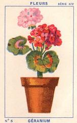 milliat fleurs005