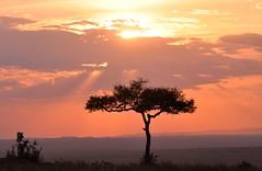 Just another Masai Mara Sunset. (One more shot Rog) Tags: sunset sky sunlight colour tree sunrise evening kenya sunsets plains samburu sunup savanna masaimara dundown