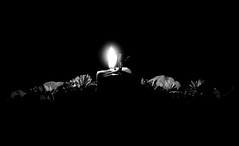 - the first candle - (mayloka) Tags: bw advent candle first gyertya ff els