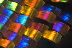 Sunset moth wing (linden.g) Tags: sunset macro focus wing moth stack scales platinumheartaward macrolife dragondaggerphoto macrolifeelite