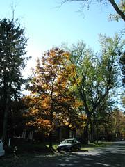 Fall Colors Boulder  DSCN0517