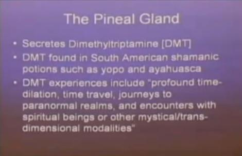pineal004